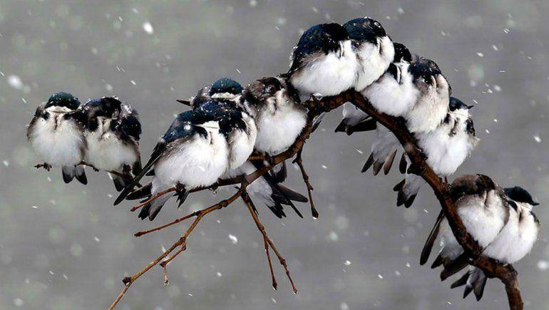 Alarma: hay un 30% menos de pájaros en EE.UU. y Canadá
