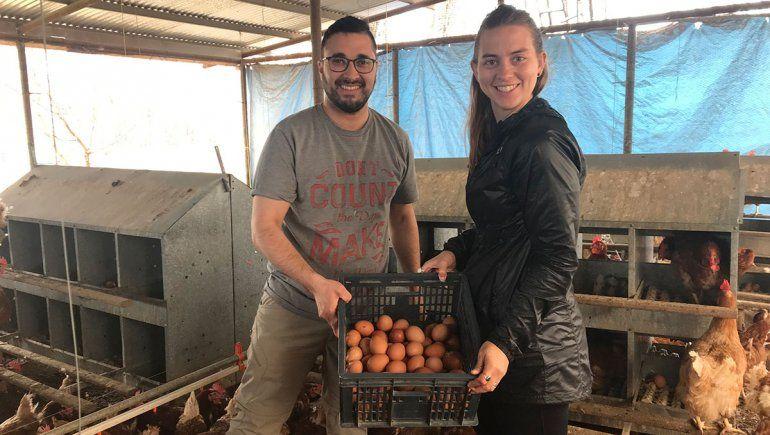 Producen huevos naturales a partir de gallinas libres
