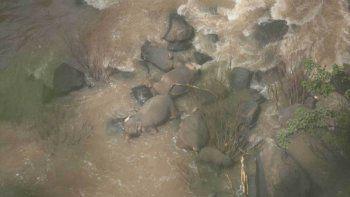 mueren seis elefantes al caer por una cascada en tailandia