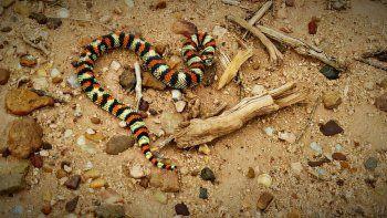 una serpiente sorprendio a los vecinos de plottier