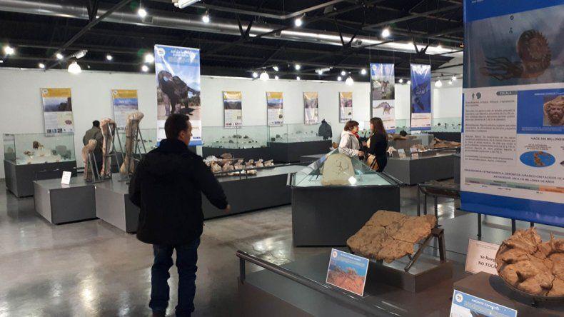 El museo de Zapala sumó 15.000 piezas paleontológicas