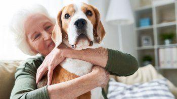 tener un perro ayuda a vivir mas despues de un infarto o un acv
