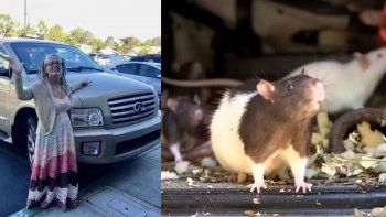 una mujer vivia con 320 ratas en su camioneta
