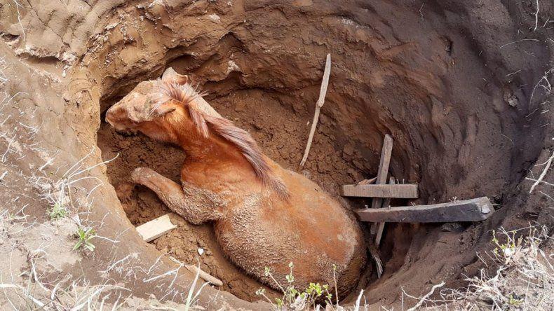 Rescataron a un caballo que pasó varias horas en un pozo