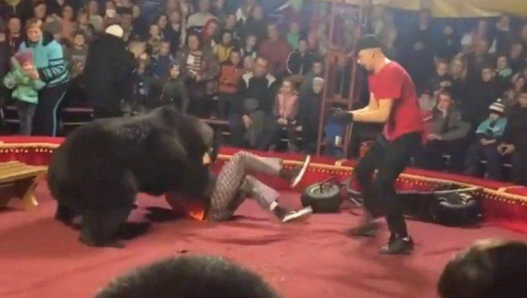 Oso atacó a domador en un circo ruso: no  lo mató de milagro