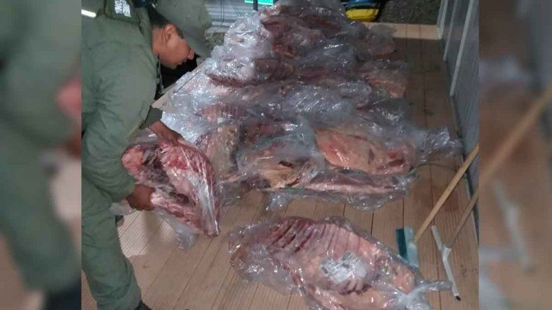 Cutral Co: decomisaron 732 kilos de carne que eran llevados a Catriel