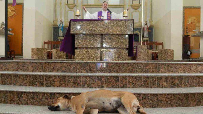 Un sacerdote da misa rodeado de perros de la calle