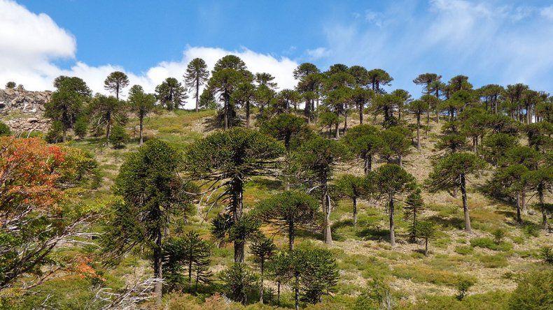 Nuevo paso para proteger a los bosques nativos
