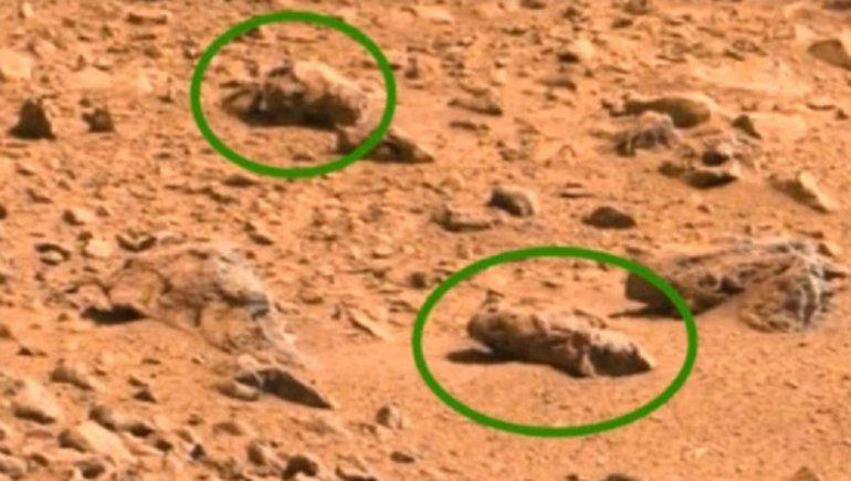 Un científico afirmó que hay presencia de insectos en Marte