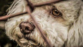 la ciudad de buenos aires contra el maltrato animal