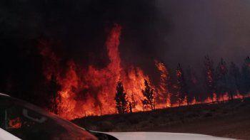incendio forestal quemo mas de 900 hectareas de pinos