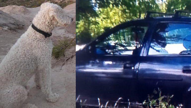 Le robaron el auto en el estacionamiento de un súper con su perro adentro y no aparecen