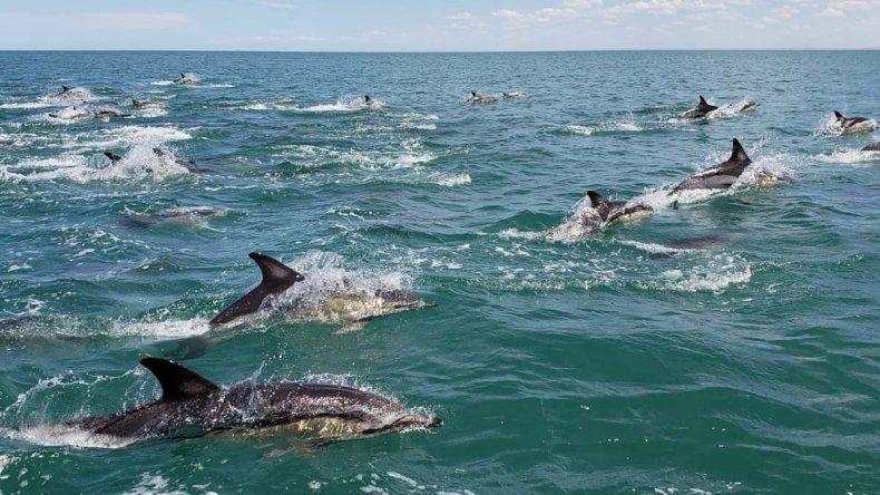 Fusilan a delfines y ofrecen recompensa por los culpables