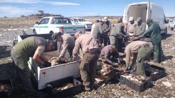 dejaron de enterrar y lograron donar a comedores cientos de kilos de pesca en laguna blanca