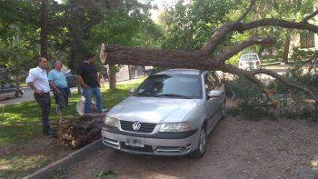 en medio de la alerta por fuerte vientos, un arbol cayo encima de un auto en el centro