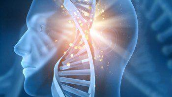 descubren el gen arquitecto del rostro humano
