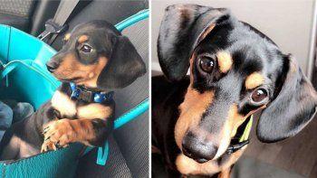 horror: veterinario sacrifico al perro equivocado