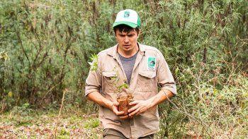 regalarle un arbolito al planeta, la propuesta de vida silvestre