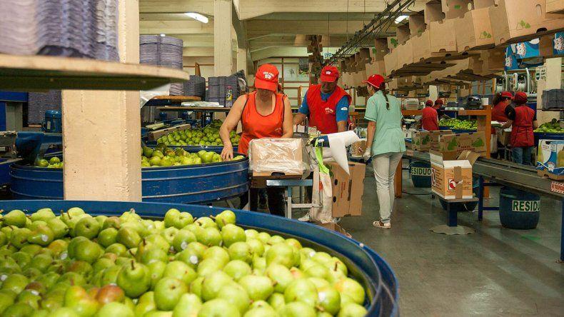 AFIP instrumenta asistencia para la producción de peras y manzanas