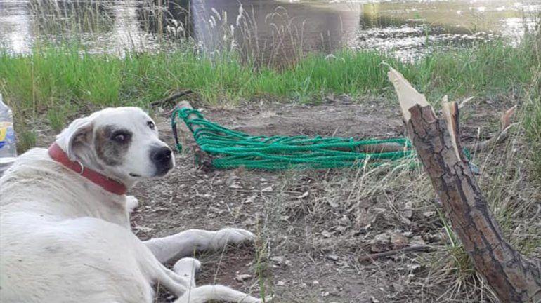 Rolo, el perro que fue rescatado de un islote, se recupera rodeado de amor