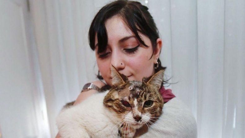 Coqui, el gatito que recibió 15 balinazos en la cabeza