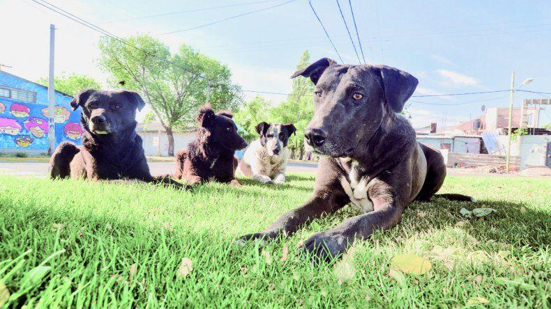 Los perros sueltos siguen siendo un gran problema en la ciudad.