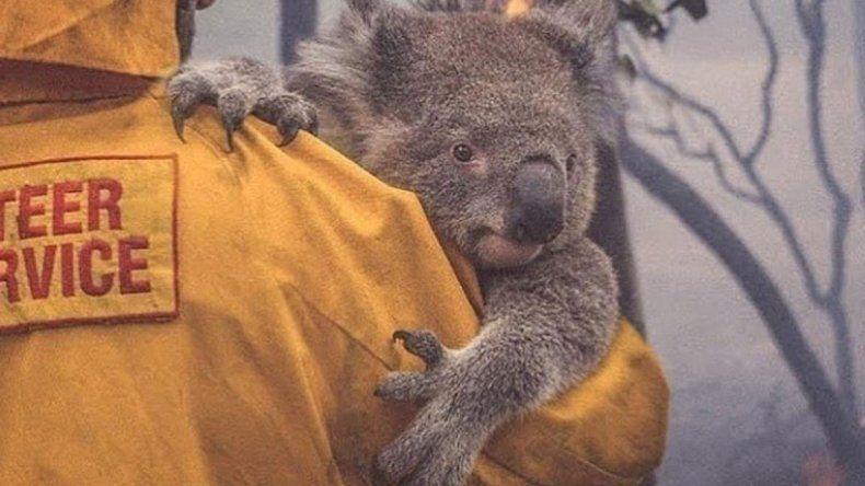 Australia: la imagen de un rescatista que le da agua a un koala recorre el mundo