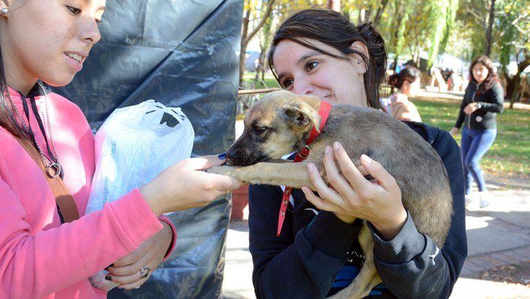 Les buscarán familia a 20 perros en el paseo costero