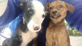 abandono cuatro cachorros y lo multaron: debera pagarles la comida hasta que los adopten