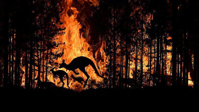 Australia: más de mil millones de animales afectados