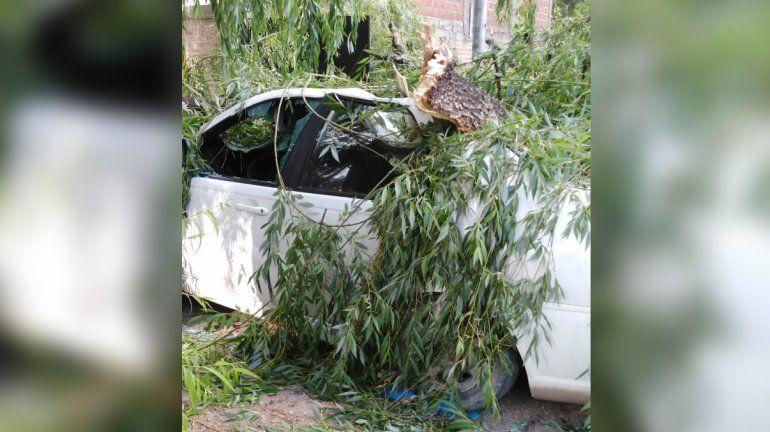 Vista Alegre: un viejo árbol cayó y aplastó un auto estacionado