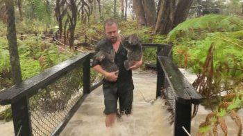 el diluvio del siglo llevo alivio a australia tras los incendios