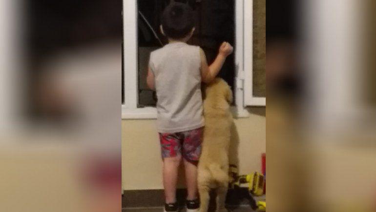 Giovanni busca a Toto, el Golden que es su compañero de aventuras: conocé la historia