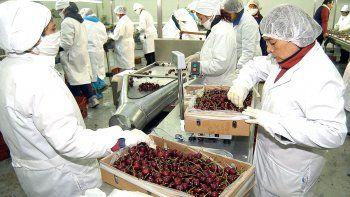 neuquen exporto mas de 900 toneladas de cerezas