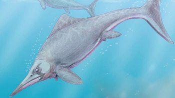hallan restos de un reptil terrestre que vivio hace 150 millones de anos