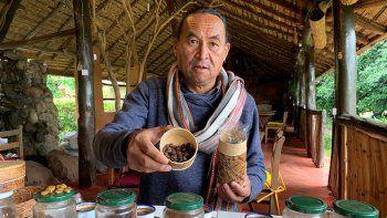 nuevo manjar: granos de cafe masticados por murcielagos