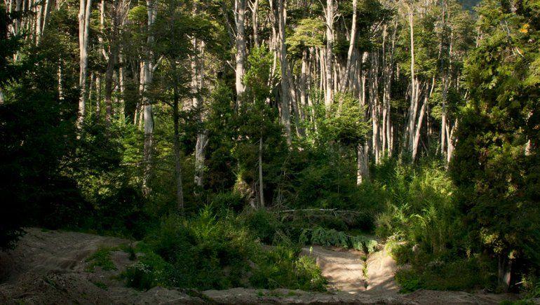 En La Angostura, los vecinos salen a defender los bosques