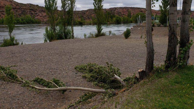 tala de árboles a la vera del río limay