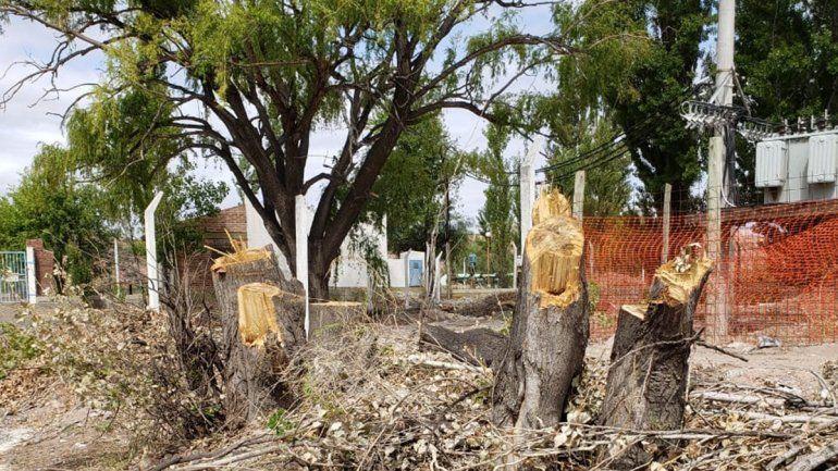 Denuncia por tala de árboles