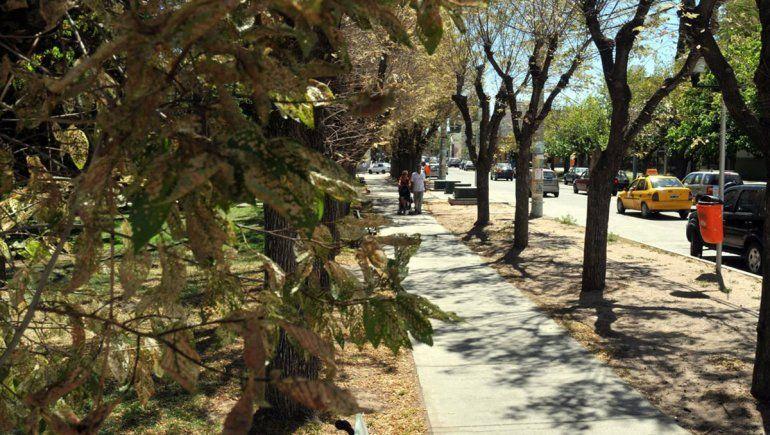 La Plaza Ministro González, un lugar donde nacieron miles de historias de amor.