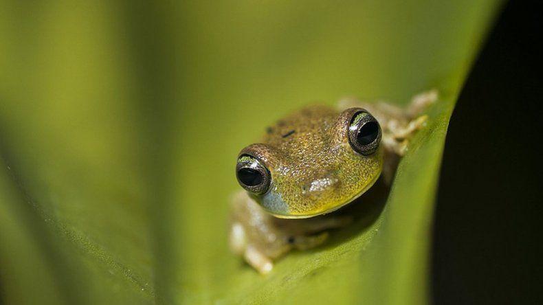 Un tercio de las especies se extinguirían de acá a 50 años