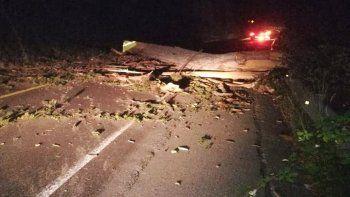 El pesado árbol cayó sobre la Ruta 231, a pocos metros del vehículo en el que viajaban.
