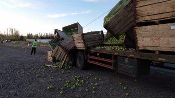 cipolletti: camion que transportaba peras perdio su carga