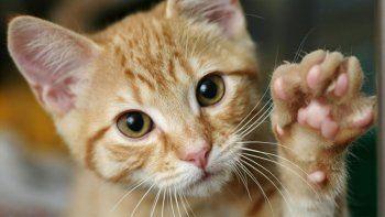 ¿por que se festeja hoy el dia mundial del gato?
