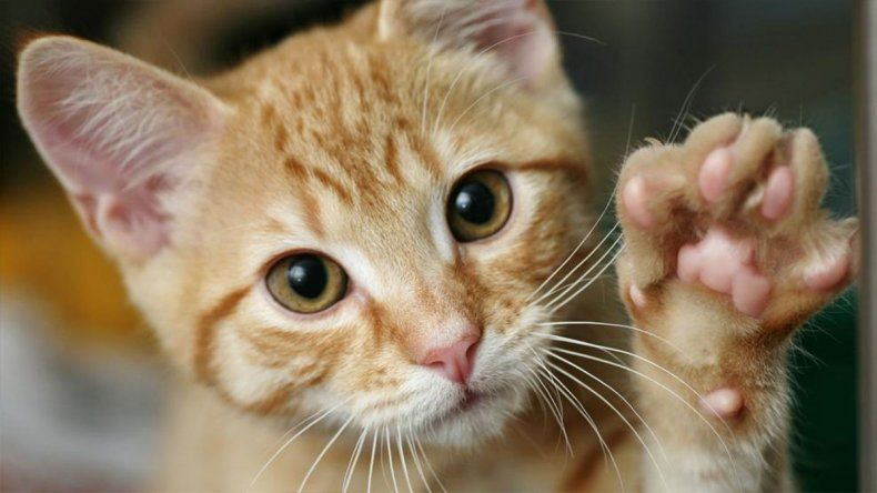 ¿Por qué se festeja hoy el día mundial del gato?
