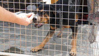 la muni arma un plan para controlar a los perros sueltos