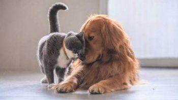 una veterinaria neuquina tratara animales con aceite de cannabis