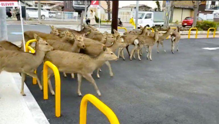 Los animales toman control de las ciudades por la cuarentena