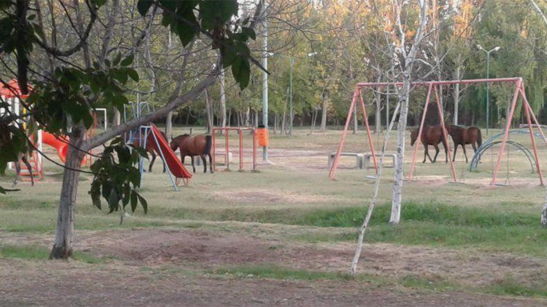 Con las calles vacías, los caballos se apoderaron de una plaza