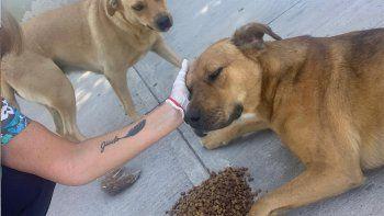 en la cuarentena, el municipio alimenta a perros callejeros